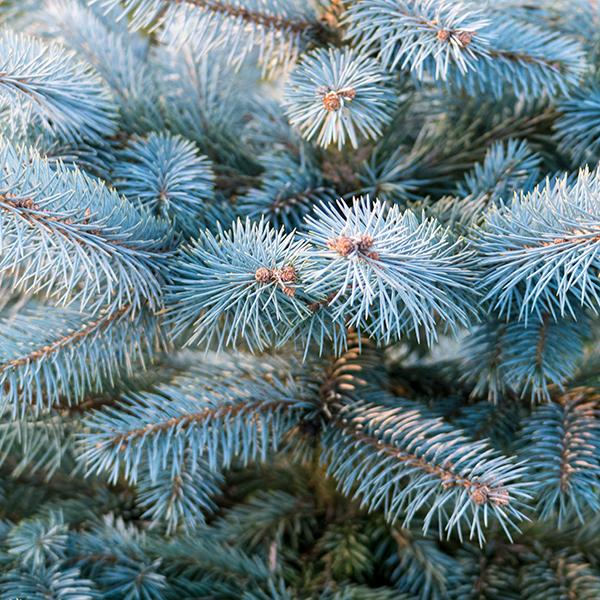 blauwspar detail 2