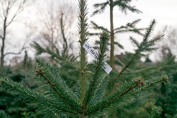 kerstboom reserveren