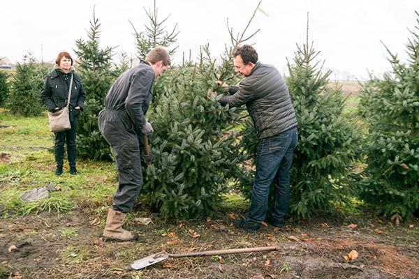 kerstboom uitsteken