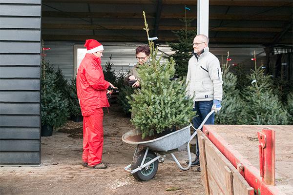 kerstboom vervoeren