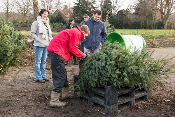 kerstboomkluit afzagen 1