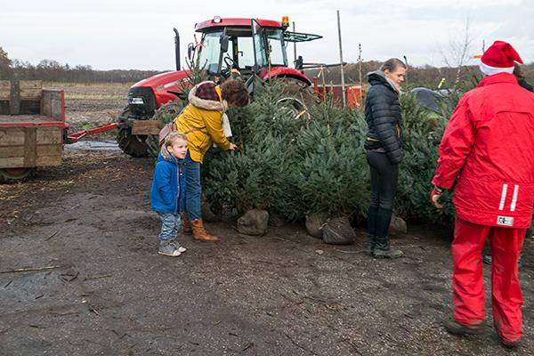 uitzoeken kerstboom 2
